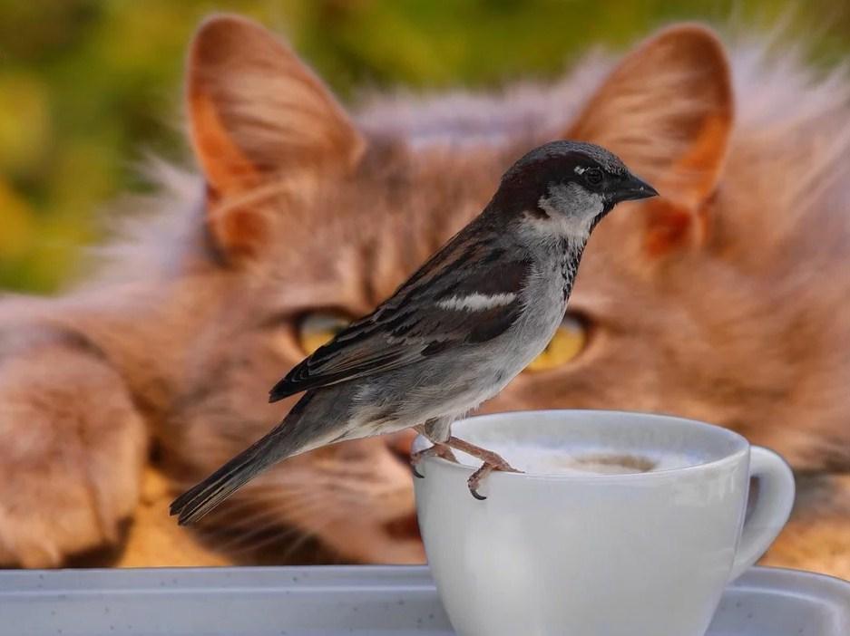 Gorrión posado en taza de café mientras gato observa