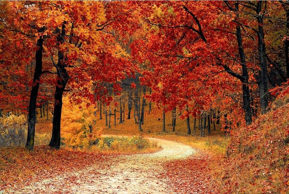 Imagen de un bosque en pleno otoño