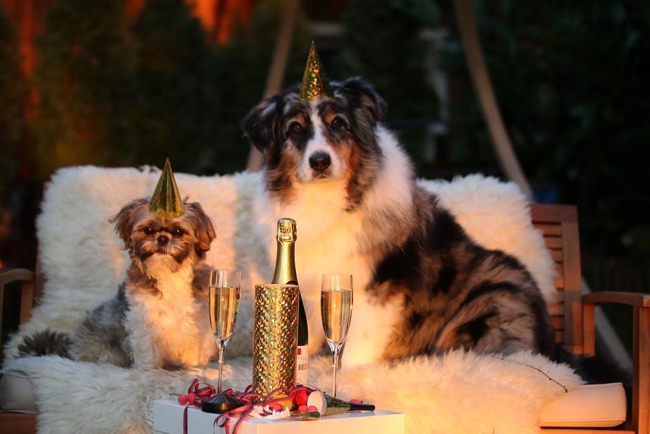 Una pareja de perros celebrando el año nuevo con bebida incluida